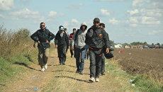 Беженцы на границе Сербии и Венгрии. Архивное фото