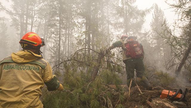 Авиалесохрана ведет работы по расчистке леса. Архивное фото