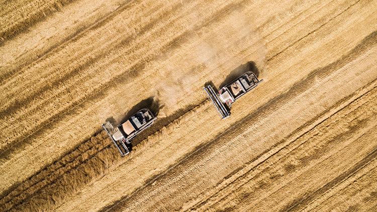 Уборка пшеницы, архивное фото