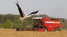 Комбайн во время уборки зерновых. Архивное фото