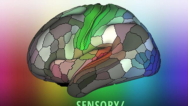 Мозг человека содержит сотню неизвестных областей— Ученые