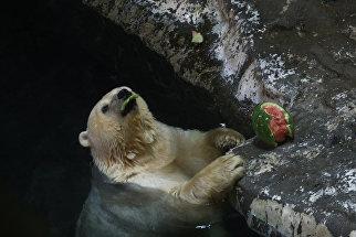 Белый медведь в зоопарке Ханчжоу, Китай