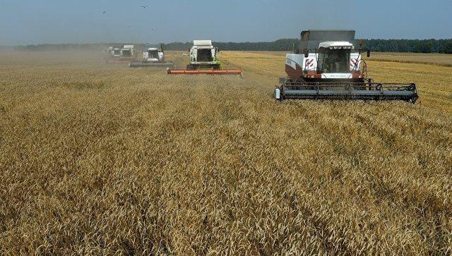 Дворкович сказал, сколько зерна Российская Федерация сумеет растить через 10 лет