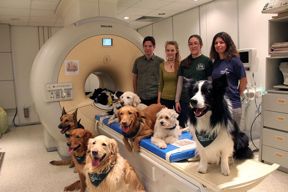 Ученые: Собаки понимают смысл некоторых слов иразличают интонации