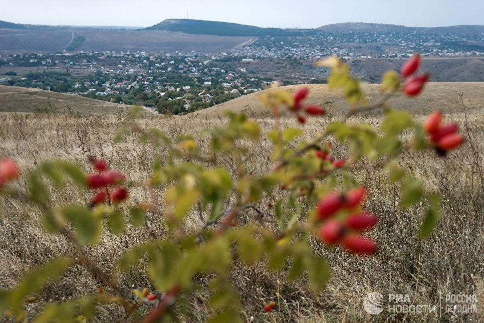 Шиповник в окрестностях села Клиновка Симферопольского района в Крыму