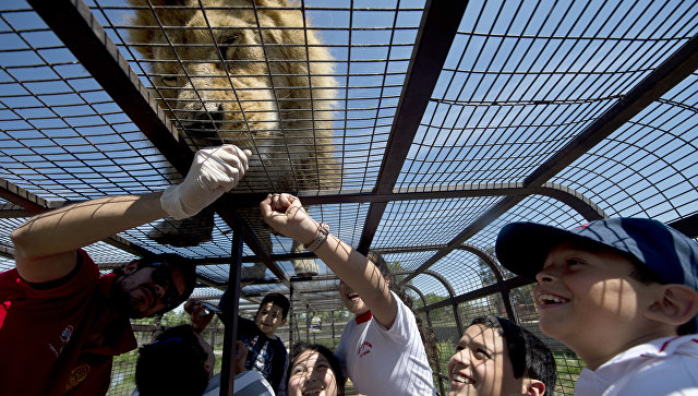 Туристы в Safari Lion Zoo в Ранкагуа в Чили