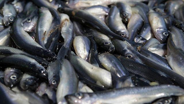 Медведев поручил следить, чтобы не было резких скачков цен на рыбопродукты
