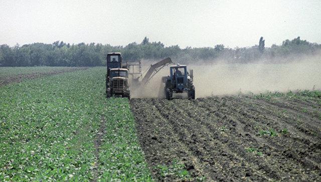 ВПензенской области собрали неменее 2 млн тонн сладкой свеклы