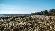 На берегу Куршского залива в национальном парке Куршская коса. Архивное фото