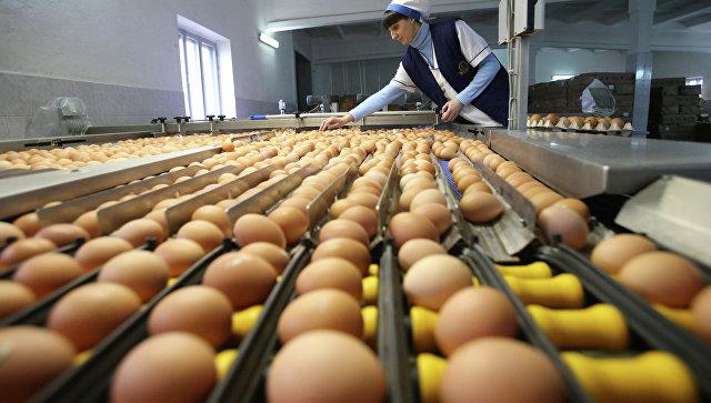 Сортировка яиц. Архивное фото