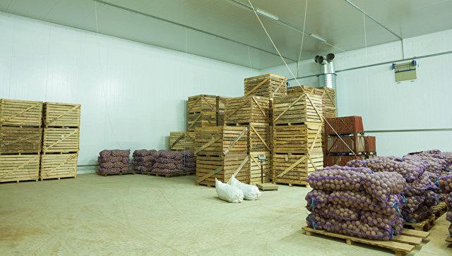 Россельхознадзор позволил частичную поставку картофеля изЕгипта