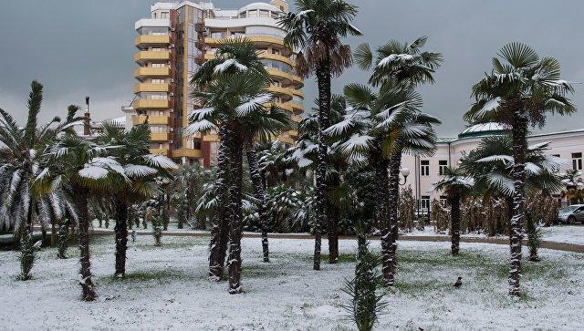 Зима в Сочи. Архивное фото