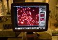 Визуализация клеточных ядер