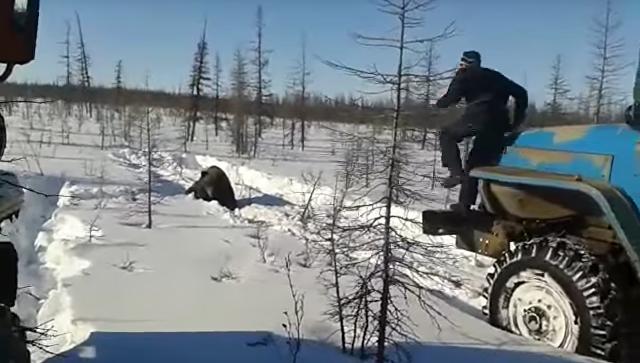 В Якутии вахтовики на Уралах намеренно задавили медведя