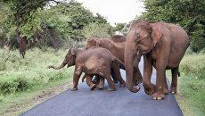 Слоны в Индии. Архивное фото