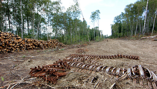 Просека в Химкинском лесу