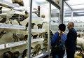 Посетители в зоологическом музее Санкт-Петербурга