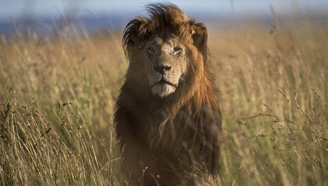 Виорданском сафари-парке львы растерзали ветеринара иего ассистента