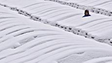 Снегопад под Санкт-Петербургом, Россия. Архивное фото