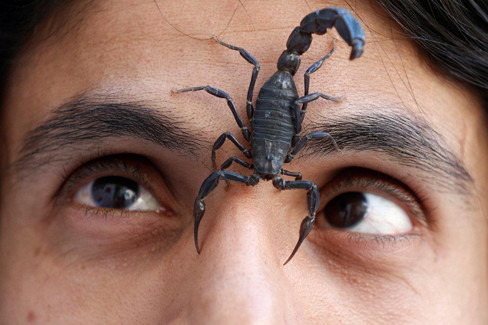 Скорпион на лице палестинца Набиль Муссы, который держит скорпионов и змей как хобби и съедает их, Саудовская Аравия