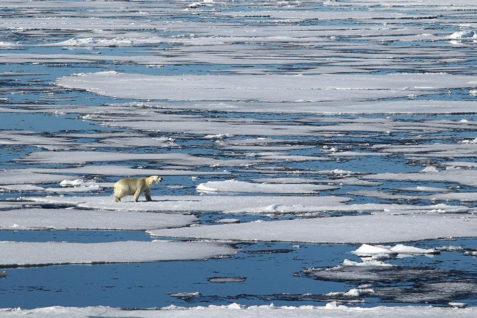Анна Моргенштерн и руководитель лаборатории полярных и морских исследований им. О. Ю. Шмидта Ирина Федорова смотрят колонки