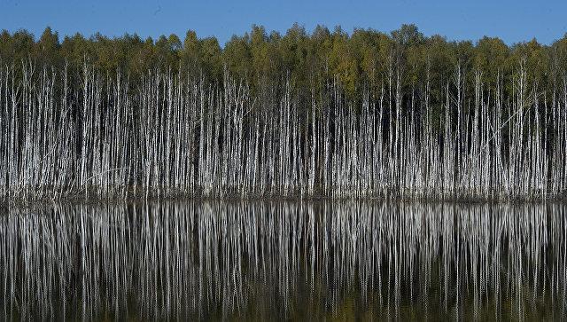 Больше трети жителей  РФ  подмечают  ухудшение экологической ситуации вгосударстве