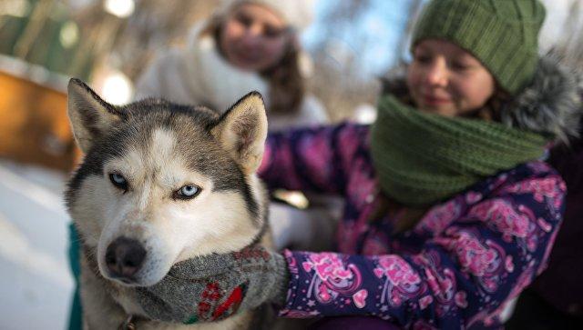 Владельцы собак живут дольше,— сообщили учёные