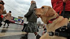 Собаки-поводыри: новые правила получения компенсации на их содержание