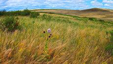 Участок Таловская степь находится на стыке границ Самарской, Саратовской и Западно-Казахстанской областей