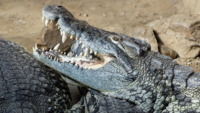 Посетители столичного зоопарка вТунисе убили крокодила