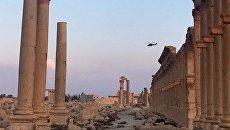 Историко-архитектурный комплекс Древней Пальмиры. Архивное фото