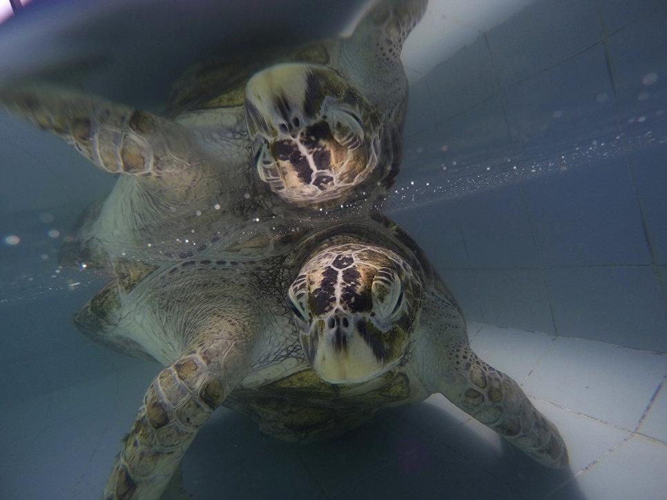 ВТаиланде погибла черепаха, проглотившая неменее 900 монет