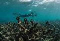 Подводный фотограф на Большом Барьерном рифе в Австралии