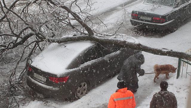 Упавшее дерево повредило машины иЛЭП назападе столицы