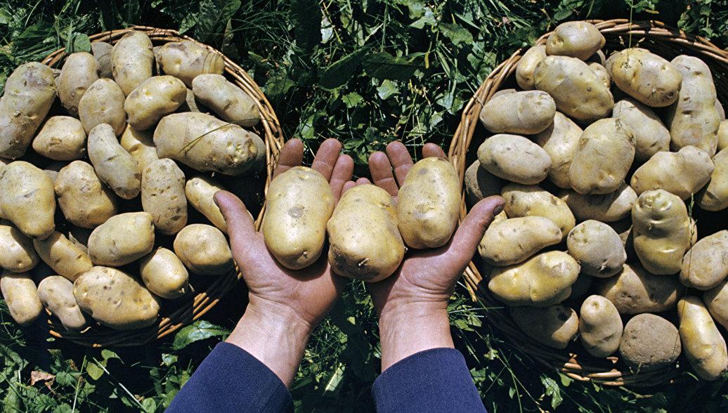 Россельхознадзор сообщил, что Белоруссия в разы увеличила поставки овощей