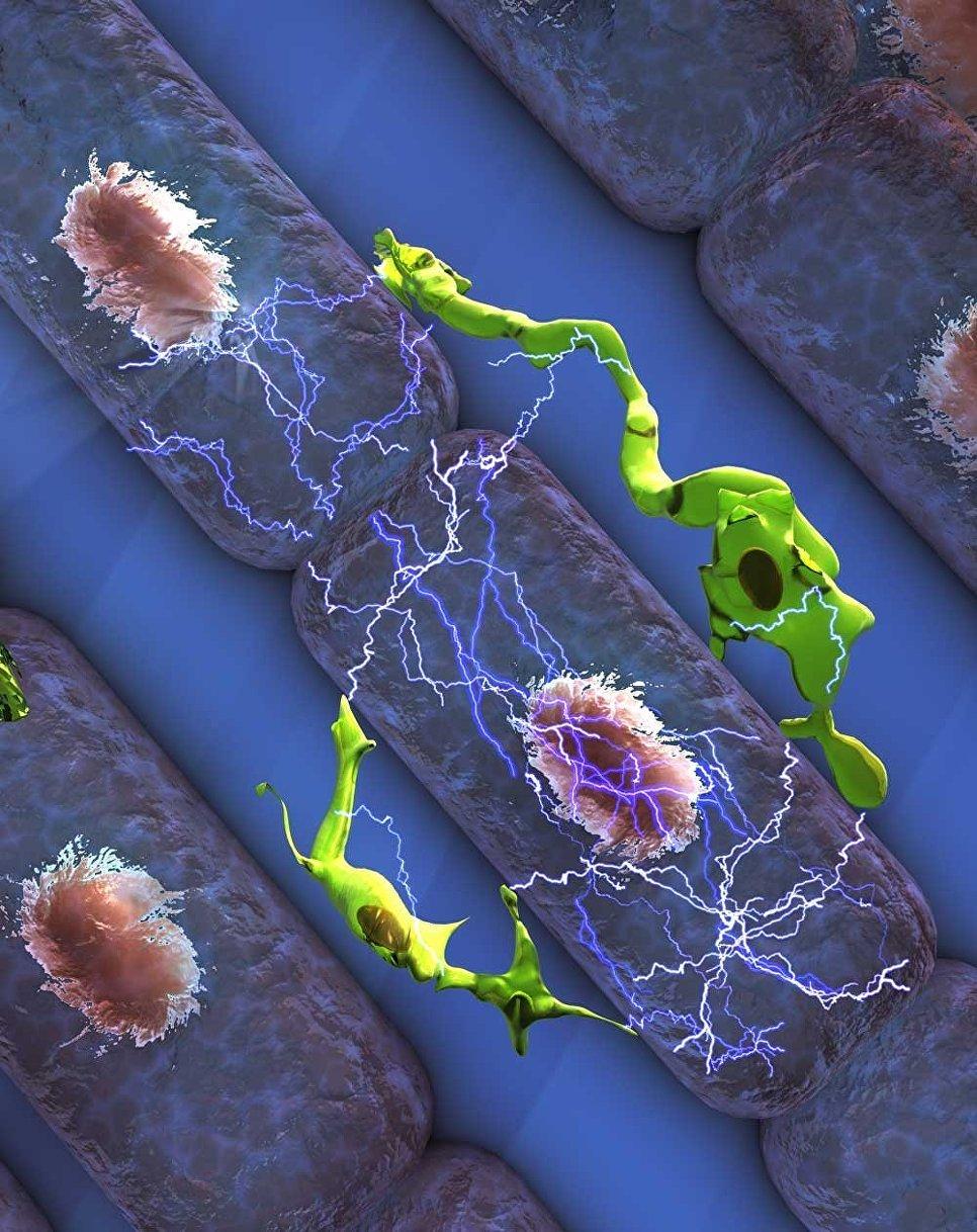 Всердце человека найден интегрированный «дефибриллятор»