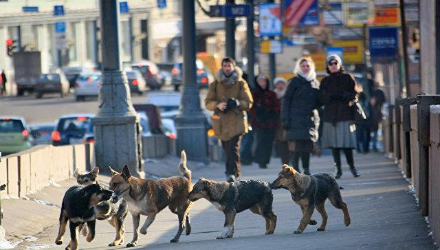 Бездомные собаки. Архив