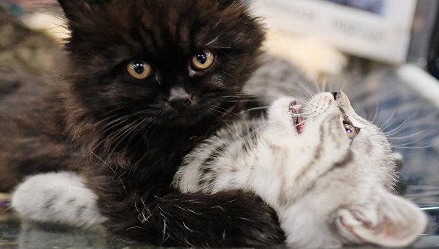 Археологи узнали, что христиане наПиренеях использовали мех кошек для одежды