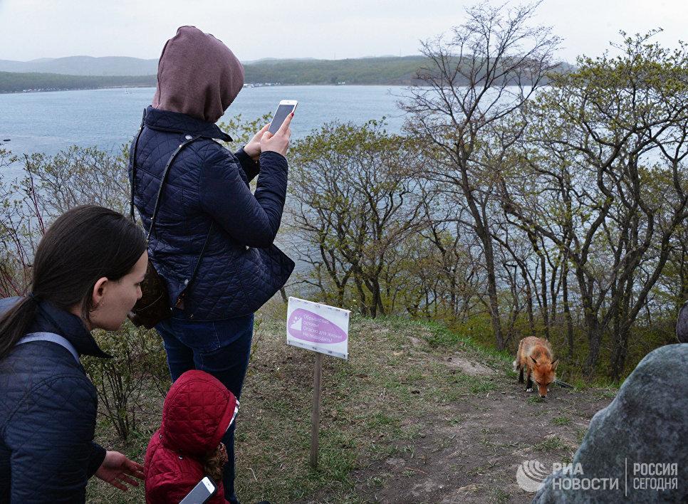 Посетители фотографируют лисицу на территории Приморского океанариума на острове Русском