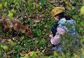 Девочка кормит лисицу. На территории Приморского океанариума на острове Русском поселилась большая лисья семья
