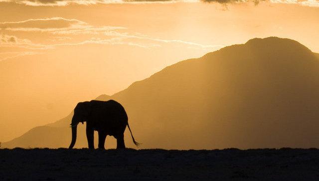 В Индии жертвами слона стали 4 человека