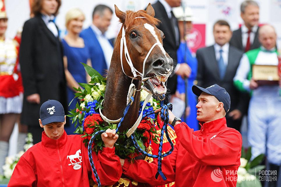 Победитель Скачек на приз президента РФ - 2017 лошадь Koнард Лoрд на Центральном Московском ипподроме