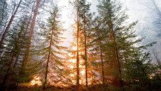 Власти трех районов Якутии ввели из-за лесных пожаров режим ЧС