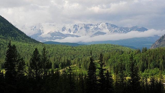 Законодательный проект о«лесной амнистии» принят в заключительном чтении