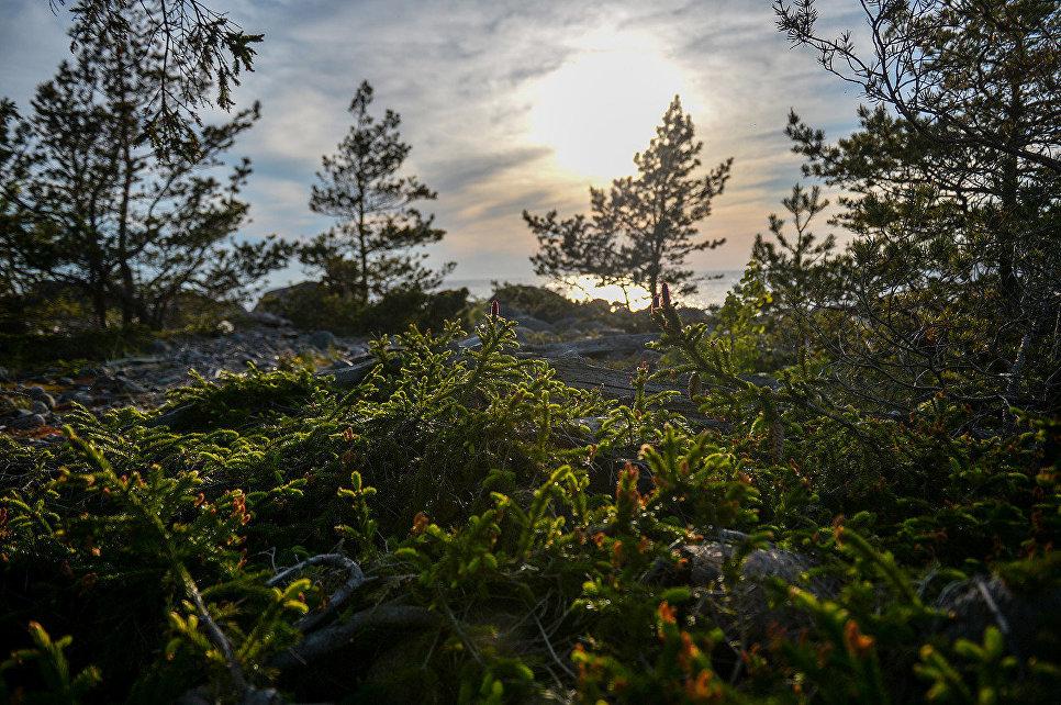 Большинство открытых мест острова во время Великой Отечественной войны было занято орудиями или казармами немецких войск. Это был самый неприступный остров среди внешних островов Финского залива
