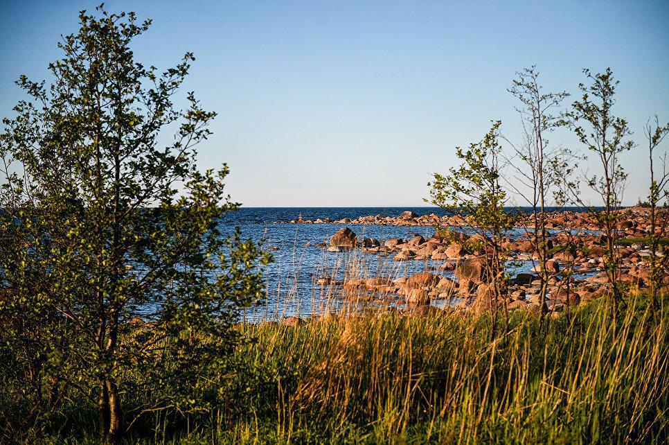 Несмотря на каменистую почву острова, на нем растет много различных деревьев
