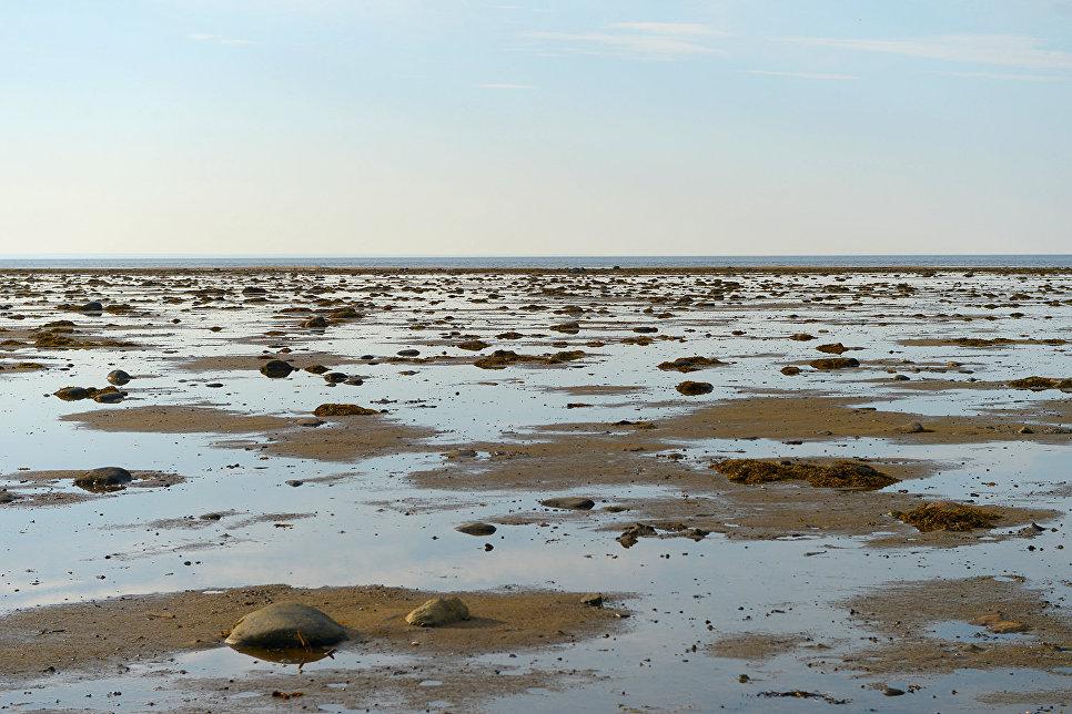 Площадь Белого моря не столь велика – 90,8 тыс. кв. км, однако его местоположение создает уникальную среду обитания