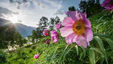В Республике Алтай пройдет Всероссийский экологический субботник