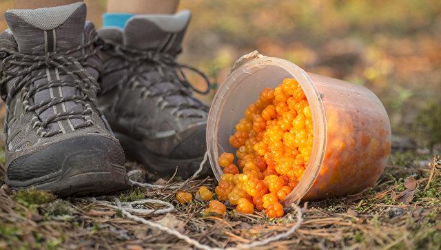 Пропавшие вФинляндии сборщики ягод из государства Украины отыскали другое место работы