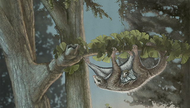 В «Поднебесной»  отыскали  останки прародителя всех млекопитающих